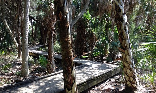 Nature path to the beach