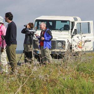 Tour privado en Doñana
