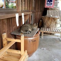 開店前のお店にいる猫|長瀞岩畳通り商店街