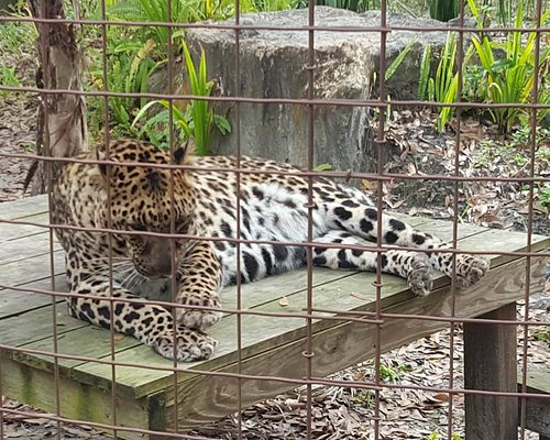 One of the two sister leopards we saw being fed