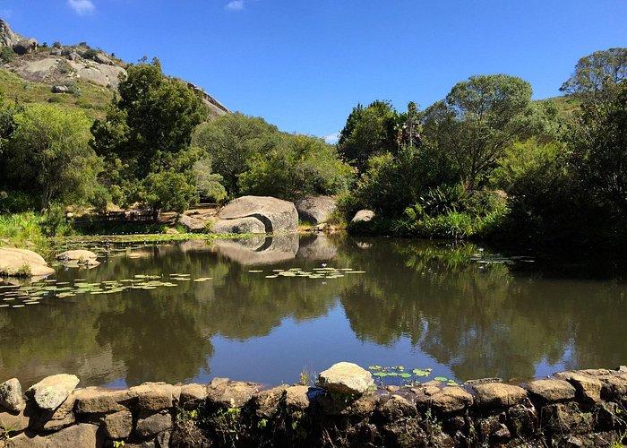 The pond next to the braai area