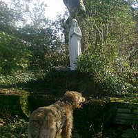 Franciscan Friary gardens, with Airedale Terrier