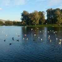 Муринский парк культуры и отдыха
