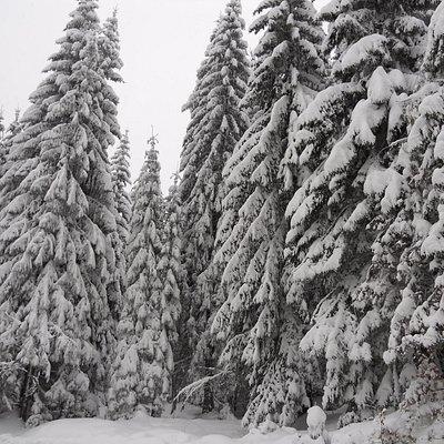 A fák...