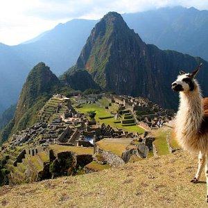 Machu Picchu & Llama