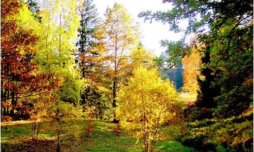 Осень в нижнем парке .