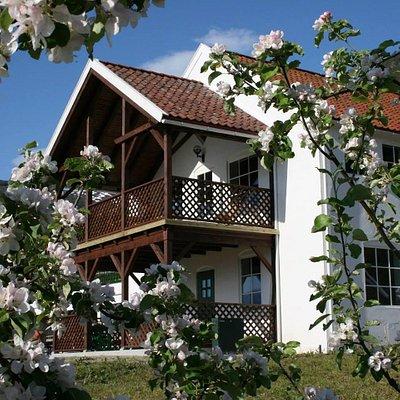Ciderhuset Balestrand in blossom