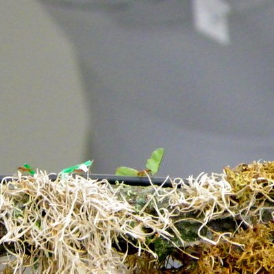 Open-Air Leaf Cutter Ants