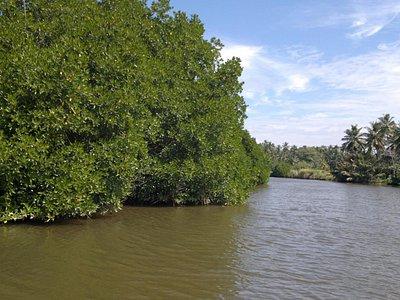 Mangroves Kochchikade Hamilton Canal Tour With Niclus