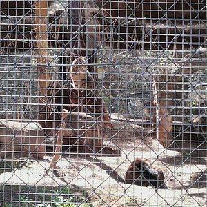 Zoo Guadalajara