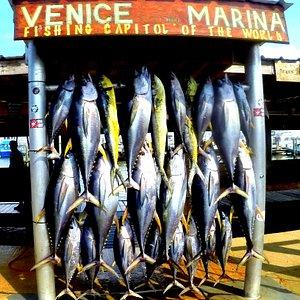 Full board Venice Marina
