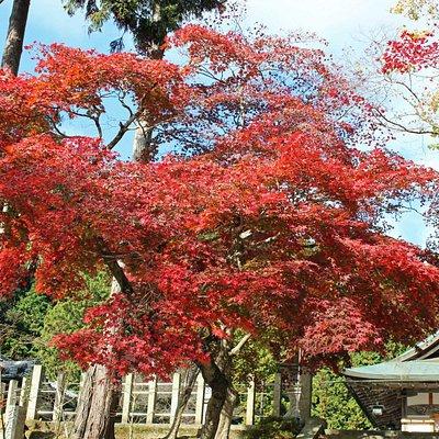 大荒比古神社階段脇の紅葉