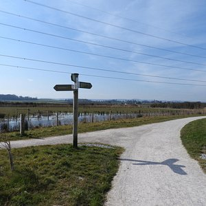 Well signposted walks around Steart Marshes