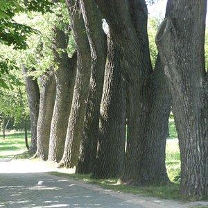 Parque de Loshitcia