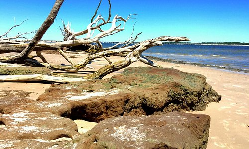 A truly rare sight to see in Florida is a rocky shoreline with driftwood everywhere.