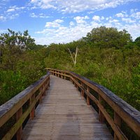 One of the several boardwalk trails at Hammock Park.