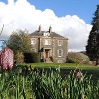 The spring bulbs starting to bloom in Harmony Garden, Melrose