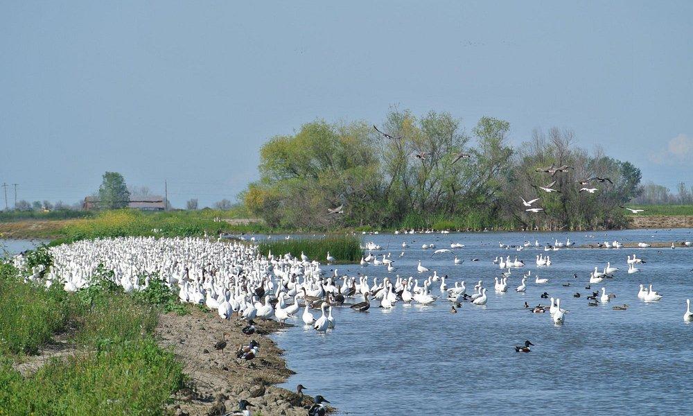 Spring migration!