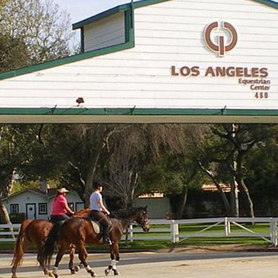 Horses & Equestrian Center 5