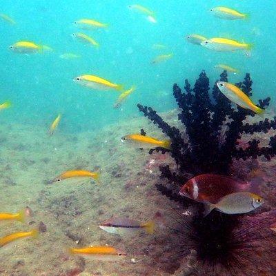 Lumut diving
