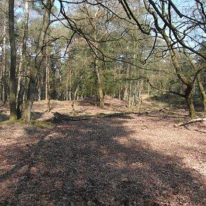 Groote Zand Hooghalen, wandelpaden