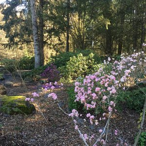 The trees and shrubs were starting to bloom.