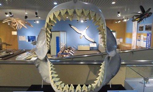 巨大なサメの口の中
