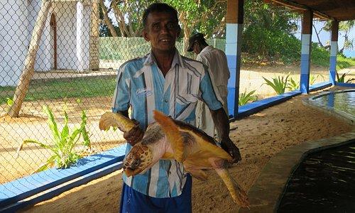 le guide nous explique les différences entre les tortues