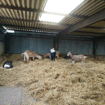 Mossburn Community Farm
