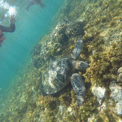 Turtle from the island