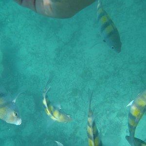 Plongée super agréable et magnifiques poissons juste sous nos pieds