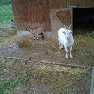 Un petit exemple des animaux présents au parc...