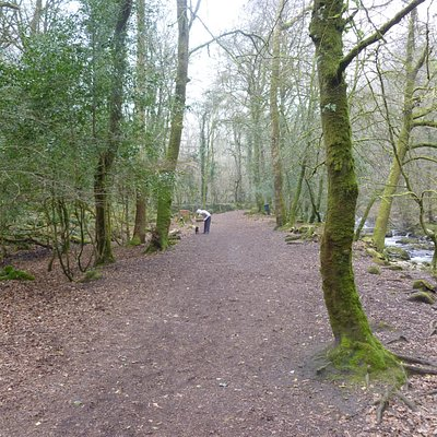 The woods with the river on the right