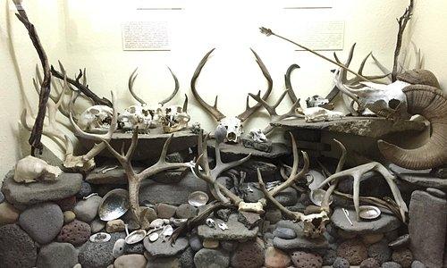 Display of indigenous hunted game