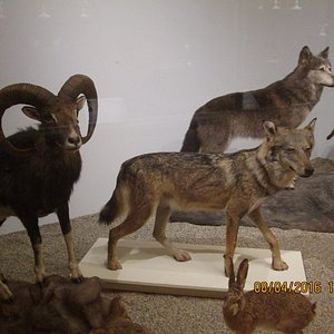 Some of the animals at the Musée Requien