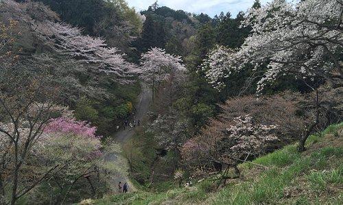 桜の園といった感じです