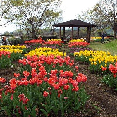 戸川公園では4月9日~17日までチューリップフェアが開催されています。(2016年4月13日撮影)