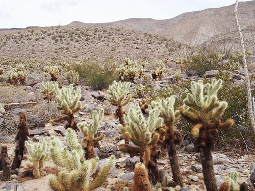 Cactus along the Yaqui Well Trail