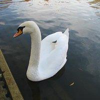 Feuersee: auch für Tiere eine ruhige Oase.