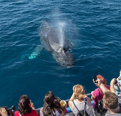Humpback whale on whale watching cruise