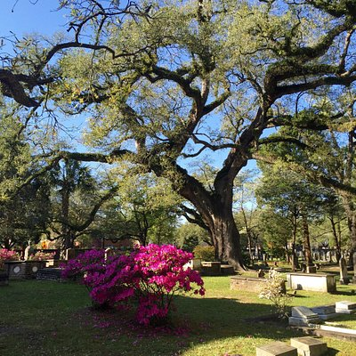 Winyah Episcopal Church grounds.