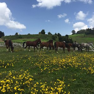 the horses in the yard