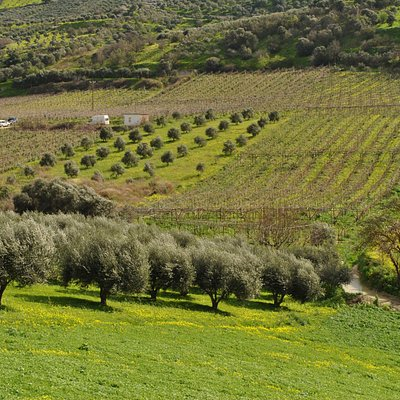 Discover the cretan vineyards and wines