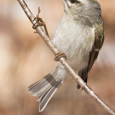 Birding, a favourite at Gamiing