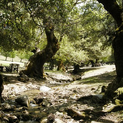 Rouvas Forest (with  oak trees )