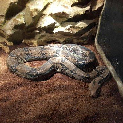 Expo reptile