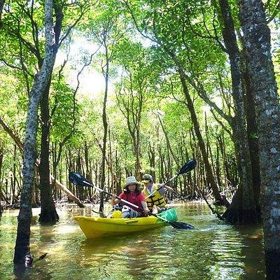マングローブの林の中をカヤックで進んでみよう