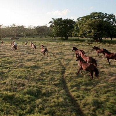 Sea Horse Ranch Equestrian Center