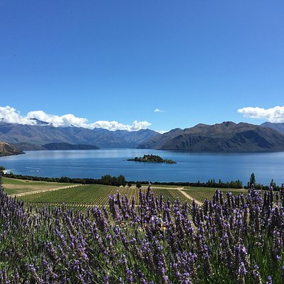 View from Rippon Vineyard