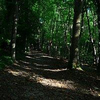 Parc de Rouelles : forêt